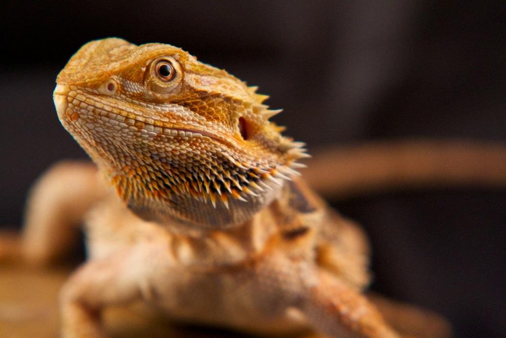 marin-reptiles-01_20