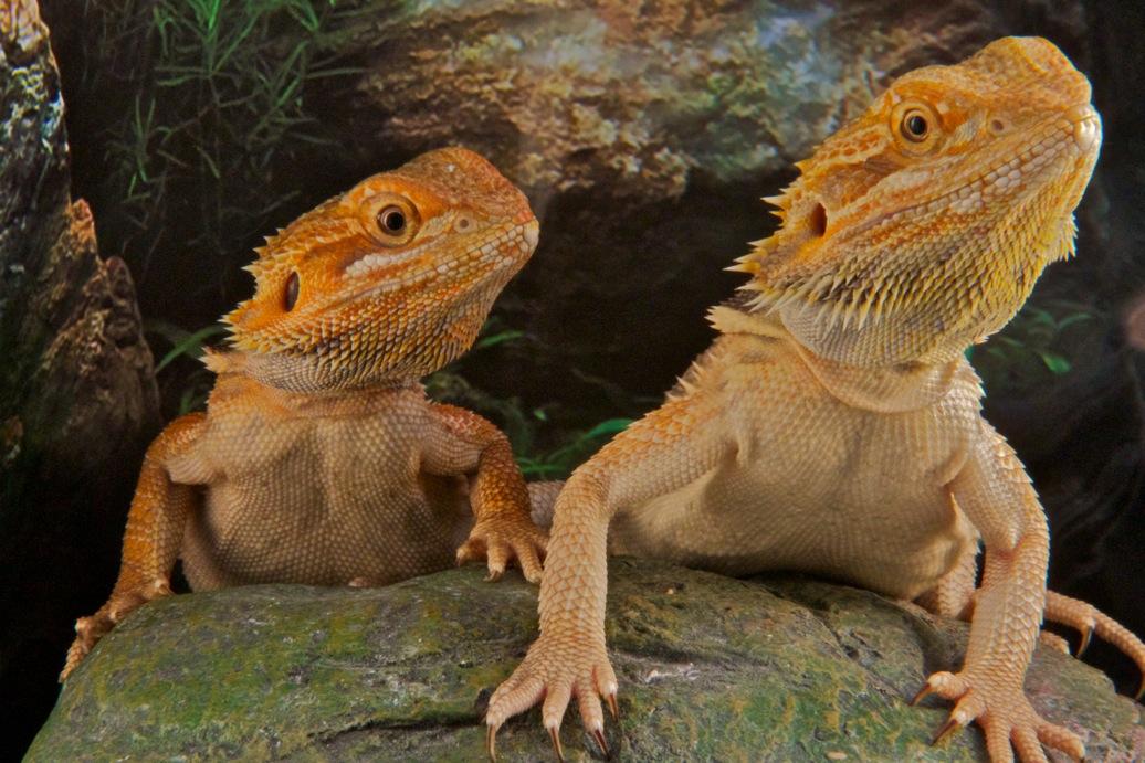 marin-reptiles-02_20