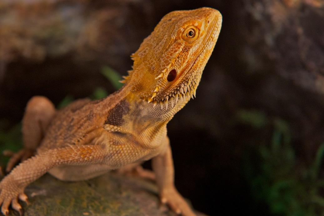 marin-reptiles-03_20