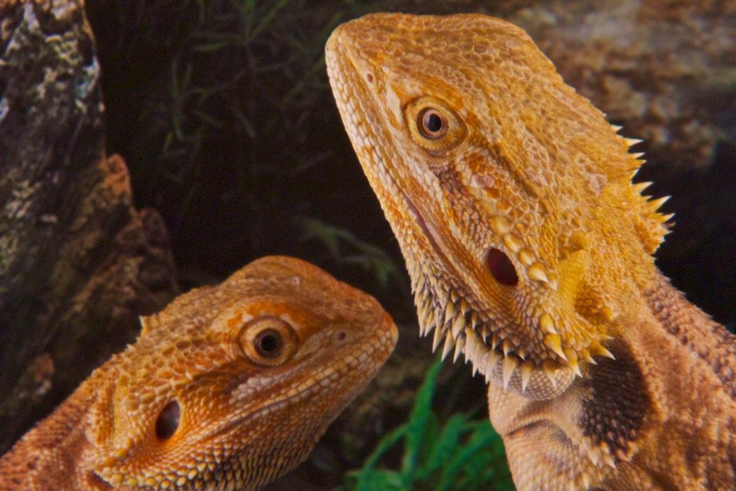 marin-reptiles-04_20