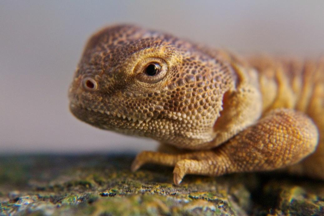 marin-reptiles-07_20