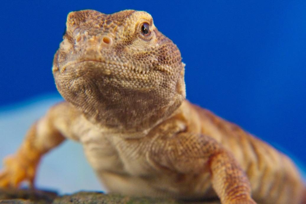 marin-reptiles-09_20