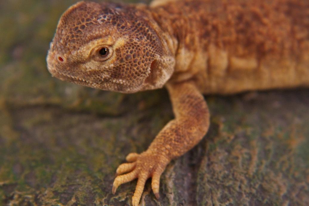 marin-reptiles-10_20